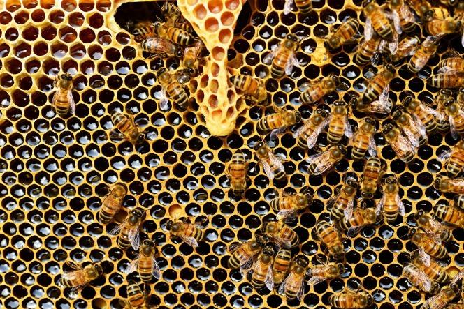 beehive-337695_1920
