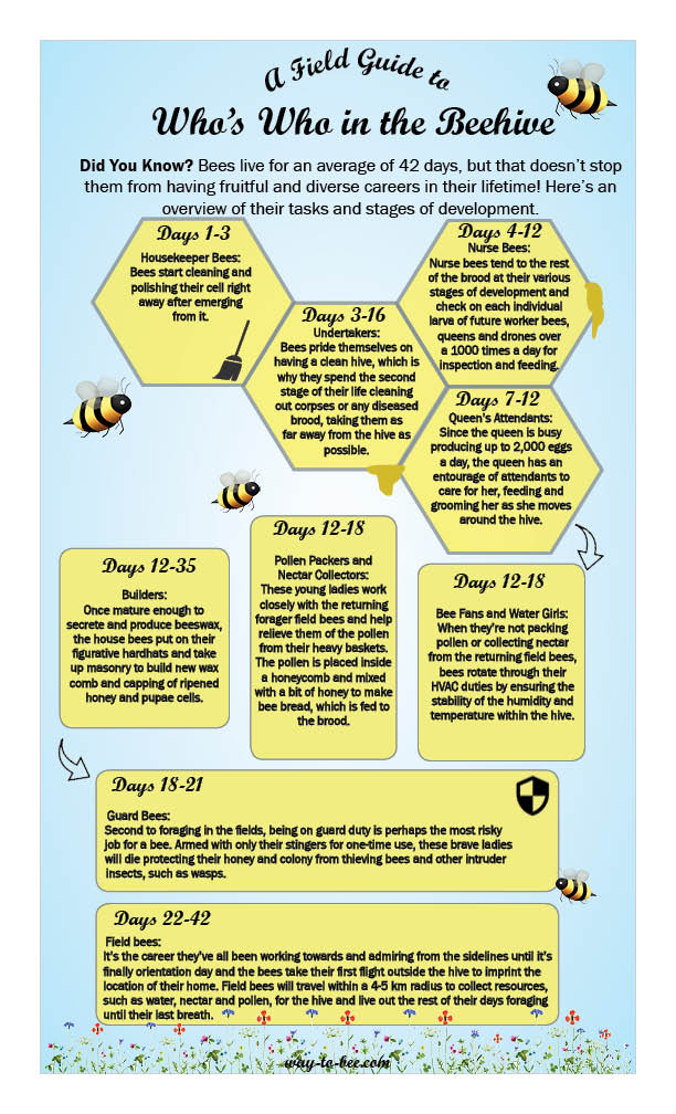 bee careers
