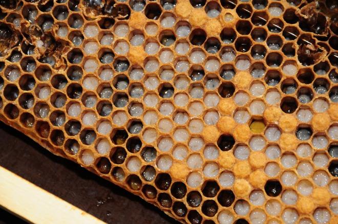 honeycomb-827476_1920